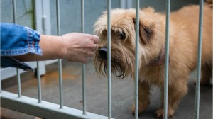 Practical reasons to adopt a shelter animal