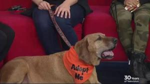 Adopt a Pet: Cooper looking for his new home