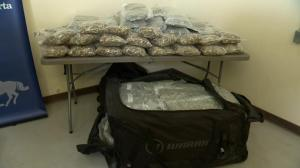 RCMP in Canmore make significant black market marijuana bust