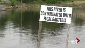 N.S. student's science project prompts vow to clean up 'environmental disaster'