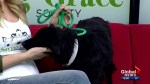 Saving Grace Animal Society sees influx of black dogs