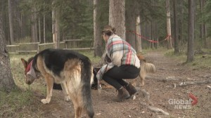 Dog owners should think twice before bringing pups to bear country: officials