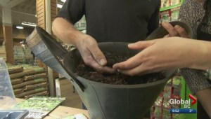 Gardenworks: When should you plant your spring seeds?