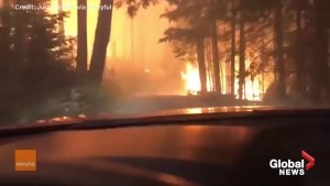 Family records their perilous journey through the heart of a forest fire