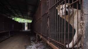 Activists rescue dogs raised for meat from farms in South Korea (01:00)