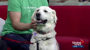 Calgary Humane Society Pet of the Week: Sadie