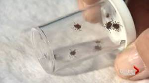 Four Toronto locations pinpointed for ticks carrying Lyme disease