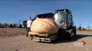 Thousands watch as massive pumpkins drop for charity