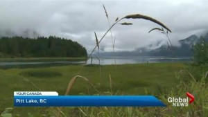 Your Canada: Thousands in search of hidden treasure in British Columbia's Pitt Lake