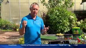 How rebar can help in watering trees and gardens