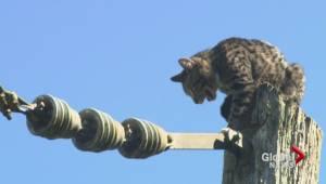 Cat rescue in Port Moody