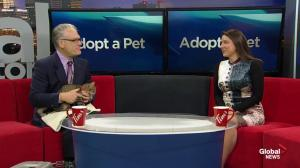 Adopt A Pet: Rupert and Agatha