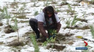 Snow doesn't dampen enthusiasm for Edmonton tree planting event