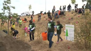 TD Tree Day in West Kelowna