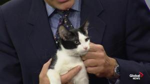 Edmonton Humane Society: Cooper & Nib