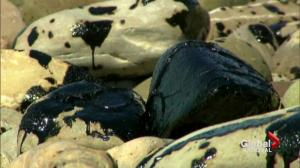 California coast oil spill nightmare after pipeline ruptures