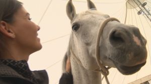 Cavalia's Red Carpet Arrival in Winnipeg
