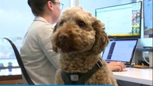 Dog-friendly office: Puppy cuddles breed productivity at one company