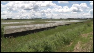 Are developers destroying habitat of Ontario's endangered species?