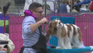 Lethbridge and District Kennel Club Dog Show underway