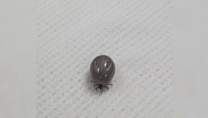 Calgary veterinarian warns of ticks within city limits