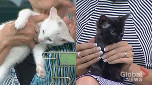 Cochrane Humane Society Pet of the Month: Merlin and Edem