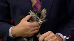 Edmonton Humane Society: Socks, Strike and Georgie