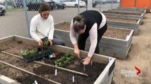 Turning a community garden into an urban farm