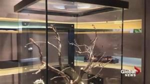 Royal Alberta Museum: Bug Gallery