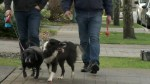 New details about remarkable survival of Coquitlam dog walker