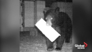 Black bear breaks into beekeeping facility, steals honey