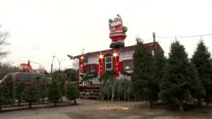 Bad harvest has merchants fearing looming Christmas tree shortage for Quebec