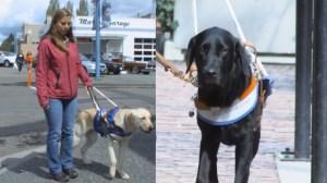 Guide dog etiquette