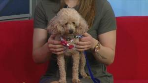 Susie up for adoption at Saskatoon SPCA