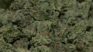 Dispensaries warned of changes to regulations ahead of marijuana legalization