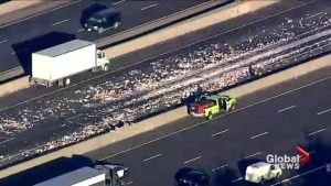 Truck carrying yogurt crashes on Hwy 401 in east-end Toronto