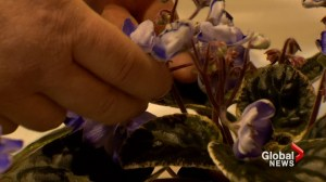 Calgary flower show enthusiasts put the bloom on Mother's Day: 'Something magical!'