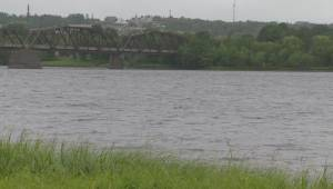 Three dogs killed by blue-green algae in Fredericton