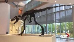 Royal Alberta Museum: lobby