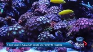 Toxic coral in aquarium sends Quebec family to hospital
