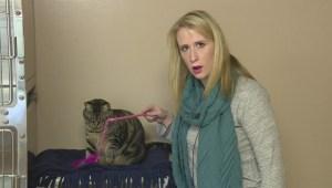 Adopt a Pet: Charlotte