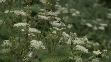 Allergy forecast 2019: What to expect from allergy season