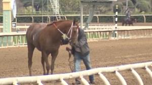 Inspectors investigating California racetrack after death of 21 horses