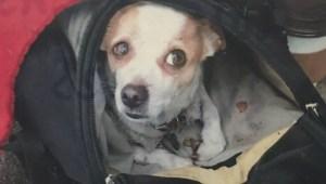 East Vancouver panhandler's dog stolen
