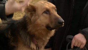 Vancouver woman reunited with missing dog