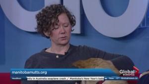 Adopt a Pal: Manitoba Mutts Dog Rescue