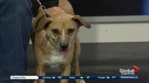 Edmonton Humane Society: Tula & Bagheera