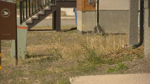 Lawn regulations could be on the way for Regina