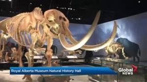 Royal Alberta Museum: Natural History exhibit