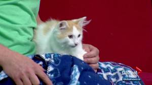 Calgary Humane Society Pet of the Week: Charlie